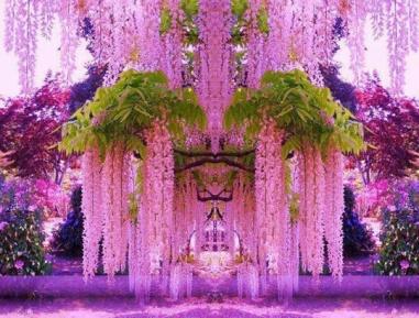 wpid-jardin-glycine.jpg