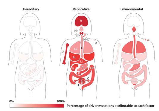 De gauche à droite, pourcentages de mutations génétiques critiques attribuables à l'hérédité, au hasard (« replicative») ou à l'environnement, en fonction des localisations des cancers.